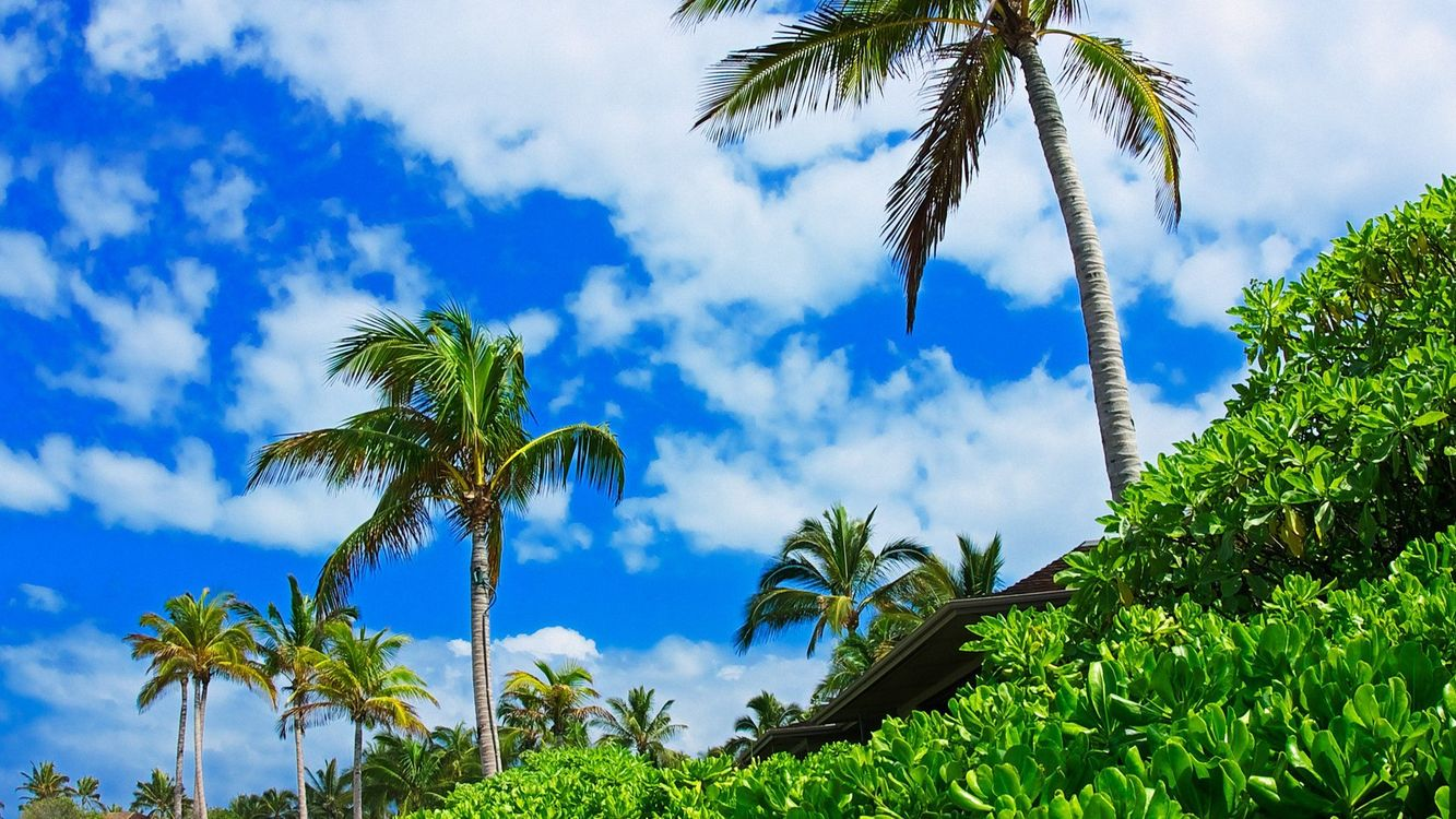Фото бесплатно пальмы, деревья, кора, ветки, трава, дом, крыши, небо, облака, лето, природа, природа