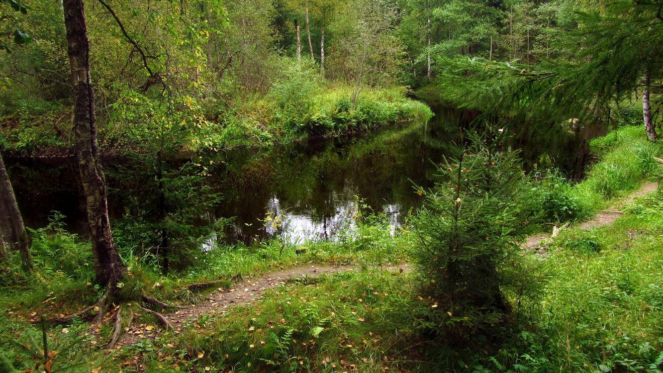 Фото бесплатно река, отражение, лес, деревья, трава, тропа, природа, природа