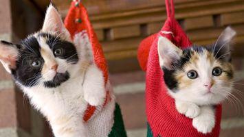 Бесплатные фото подарок, на рождество, два котенка, в чулке, у камина, кошки, новый год