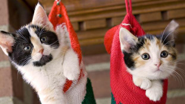 подарок, на рождество, два котенка, в чулке, у камина