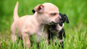 Бесплатные фото щенки, уши, лапы, шерсть, хвост, трава, глаза