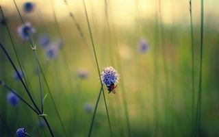 Обои шмель, цветок, нектар, крылышки, макро, природа, насекомые