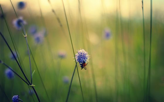 Photo free bumblebee, flower, nectar