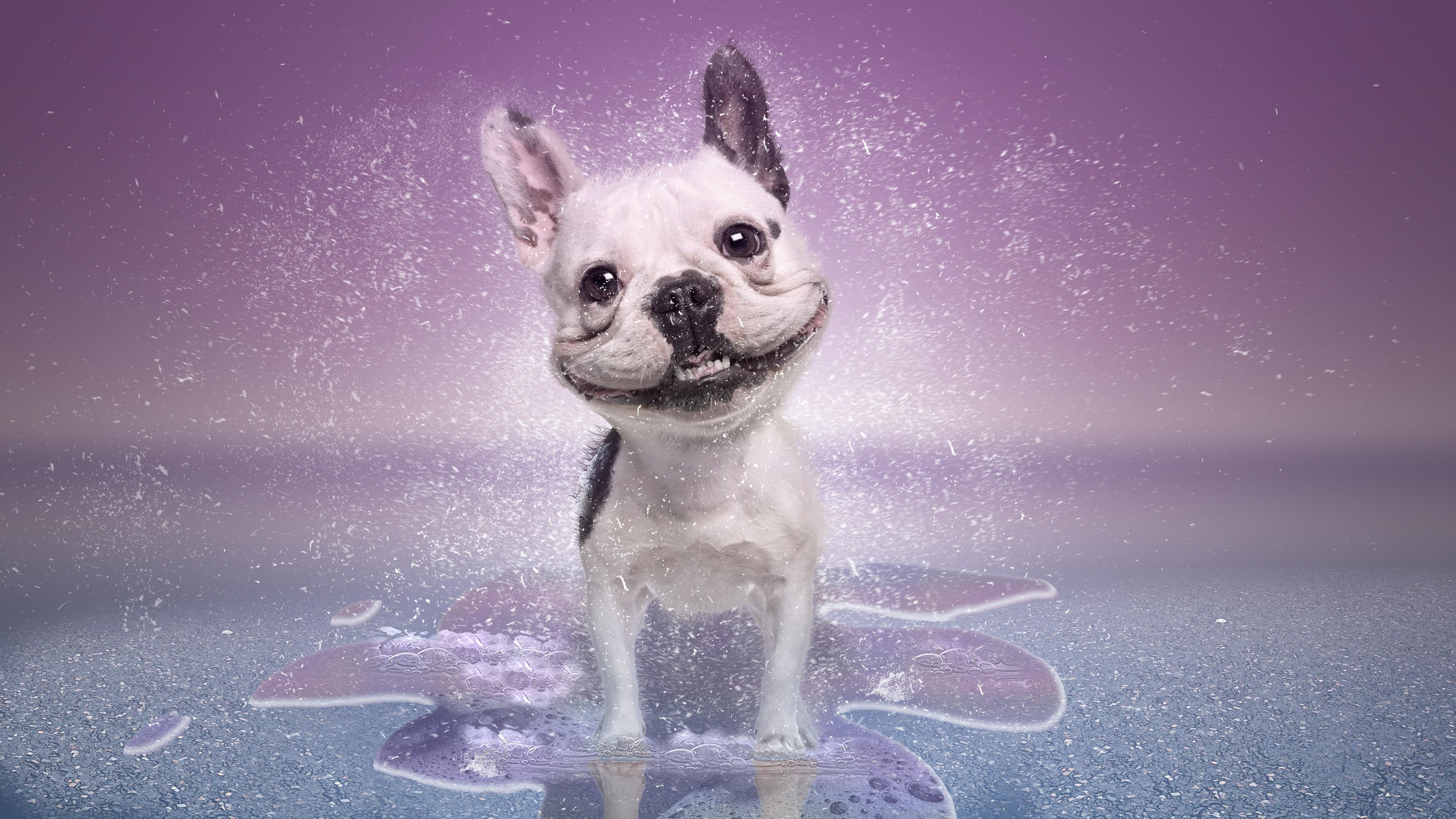 Обои собака, улыбка, art