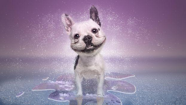 Фото бесплатно собака, улыбка, art