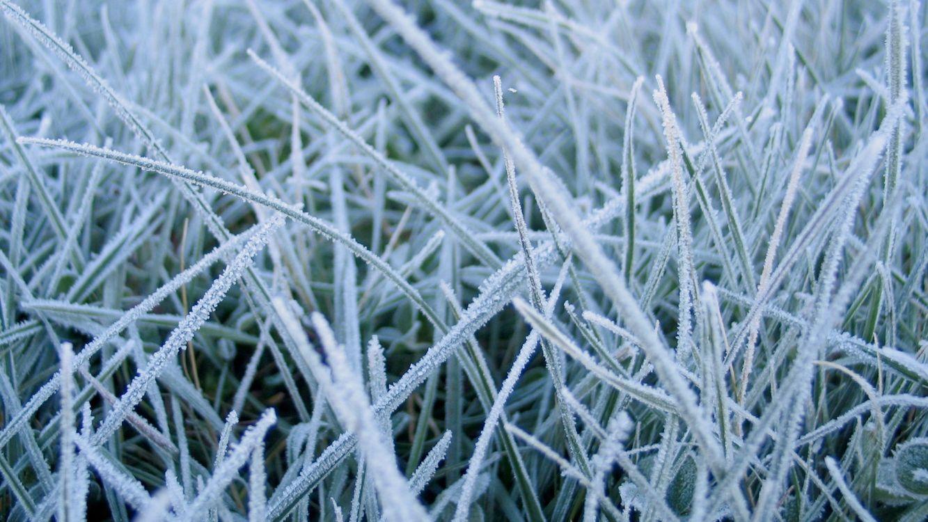 Фото бесплатно трава, красиво, иней, снег, много, необычно, близко, природа, природа
