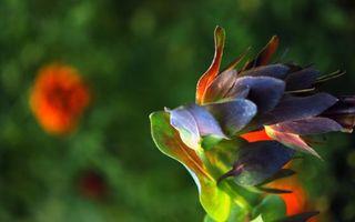 Фото бесплатно природа, травы, лето