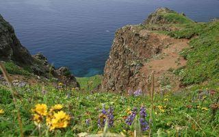 Бесплатные фото вода,озеро,скалы,цветы,чайки,трава,берег