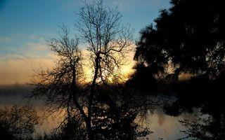 Бесплатные фото вода,трава,берег,деревья,камышь,туман,природа