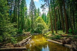 Заставки деревья, Йосемитский национальный парк, река