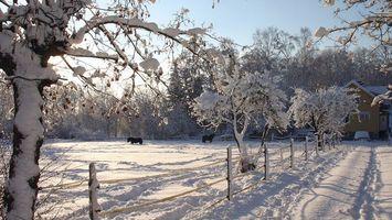 Бесплатные фото зима,природа,лошади