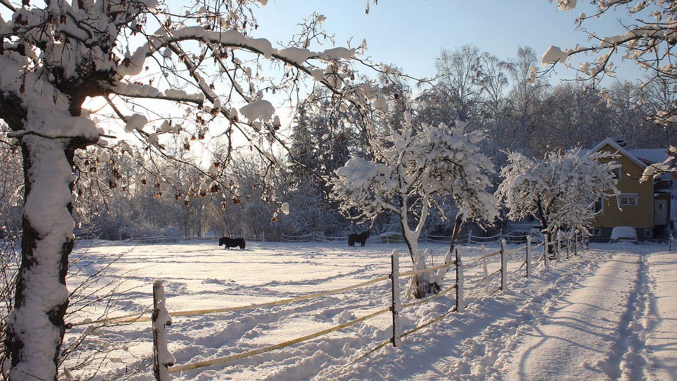 Фото бесплатно зима, природа, лошади, разное