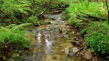 Фото бесплатно ручей, камни, вода, трава, деревья, папоротник, кусты, зелень, ветки, пейзажи
