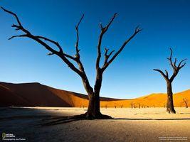 Фото бесплатно столб, дерево, коричневый, пустыня, песок, national geographic, пейзажи