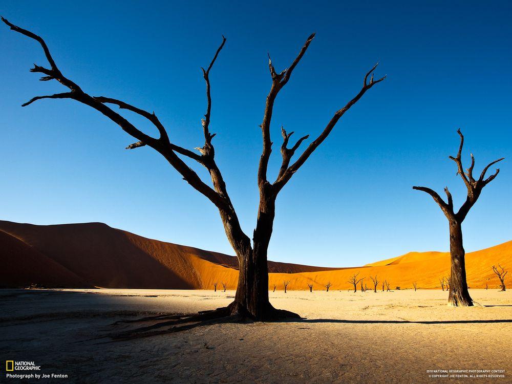 Фото бесплатно столб, дерево, коричневый, пустыня, песок, national geographic, пейзажи, пейзажи