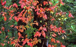 Бесплатные фото деревья,листья,осень,красные,листопад,холод,кора