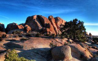 Фото бесплатно камни, трава, кусты, деревья, небо, голубое, песок, растения, природа, пейзажи