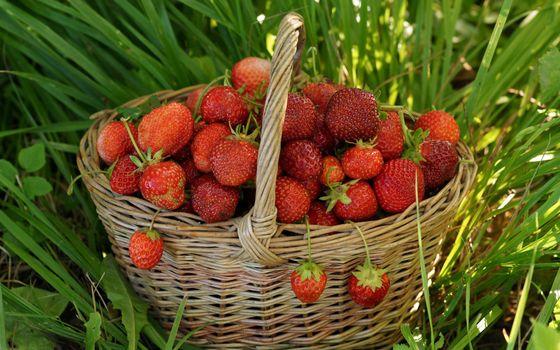 Бесплатные фото клубника,урожай,трава,зеленая,спелая,красная,корзинка,корзина,плетеная,еда
