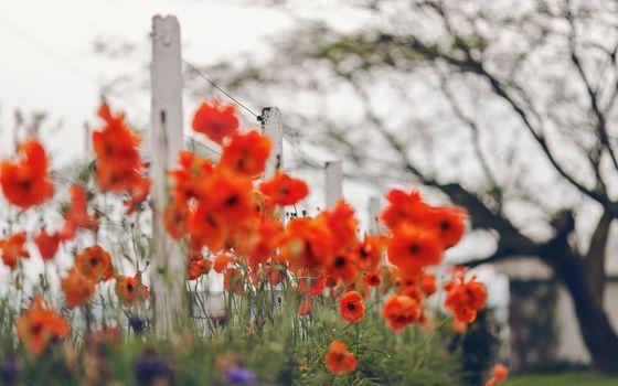 Бесплатные фото клумба,лепестки,оранжевые,стебли,ограда,проволока,дерево,цветы