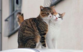 Бесплатные фото кот,кошка,и больше никого,кошки