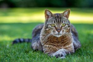 Кот на зеленом газоне