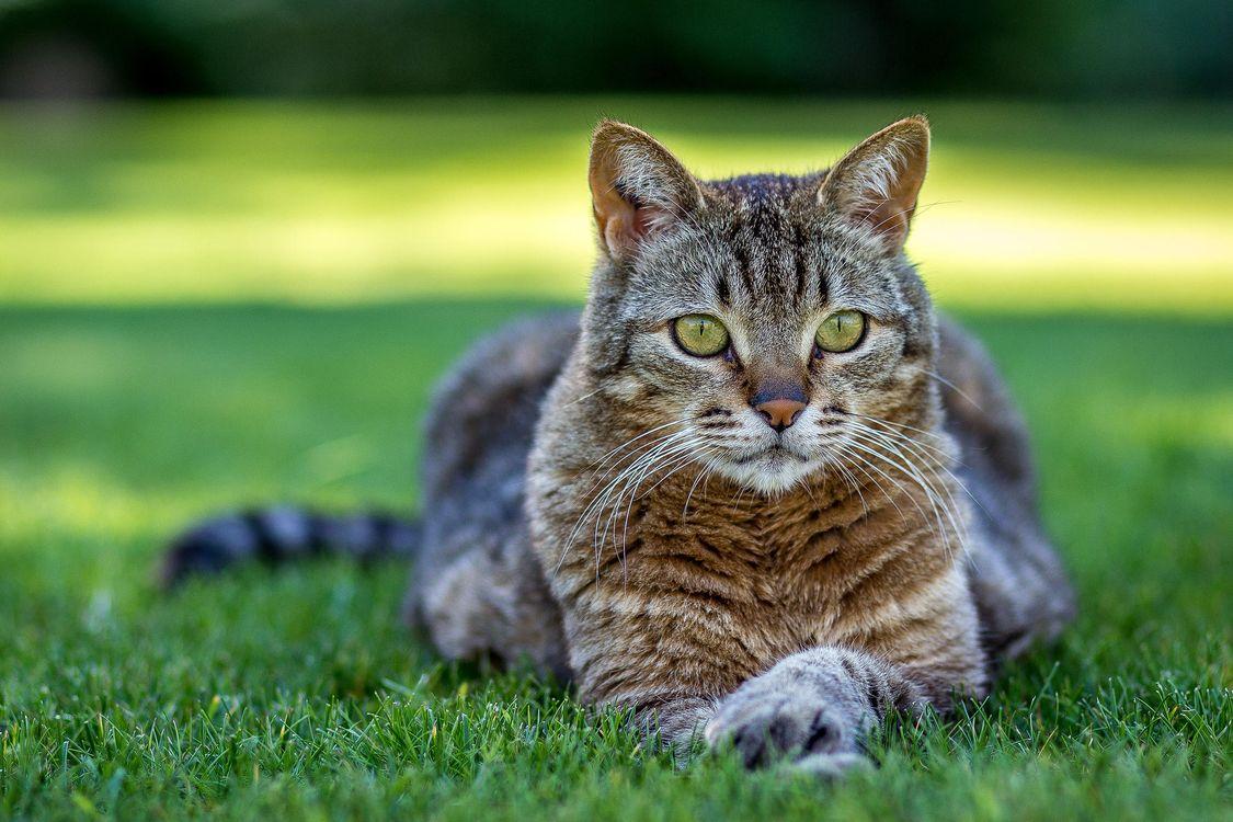 Кот на зеленом газоне · бесплатное фото