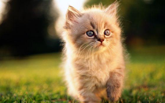 Заставки котенок, пушистик, морда