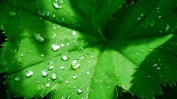 Фото бесплатно лист, лопух, капли, вода, роса, дождь, макро, природа