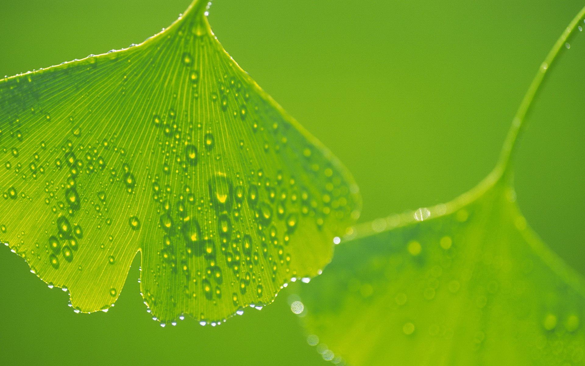 листья, зеленые, прожилки