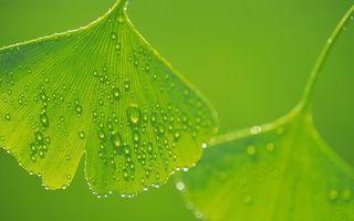 Заставки листья,зеленые,прожилки,капли,роса,дождь,макро