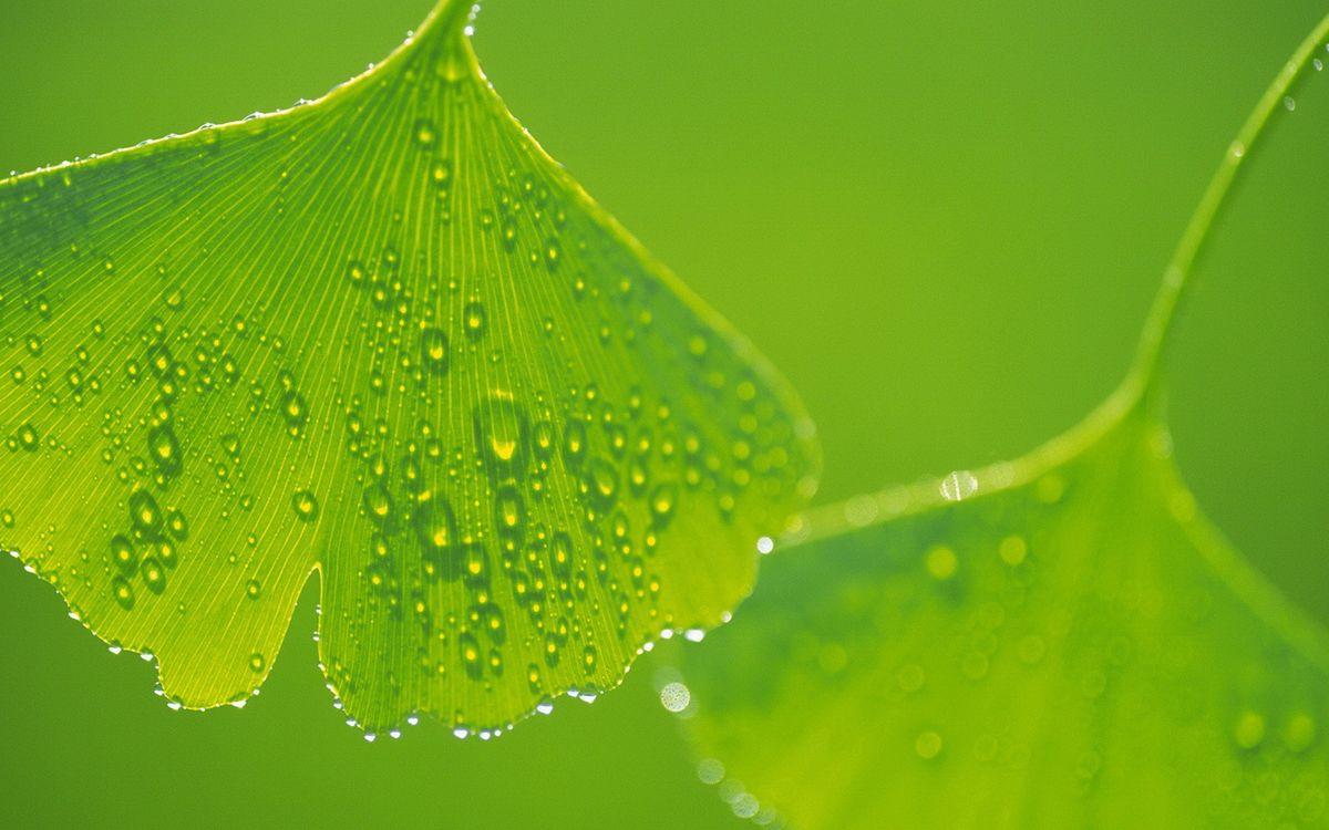 Фото бесплатно листья, зеленые, прожилки - на рабочий стол