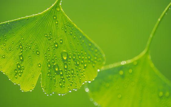 листья, зеленые, прожилки, капли, роса