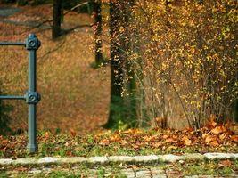 Бесплатные фото осень,кусты,листья,листопад,холод,солнце,свет