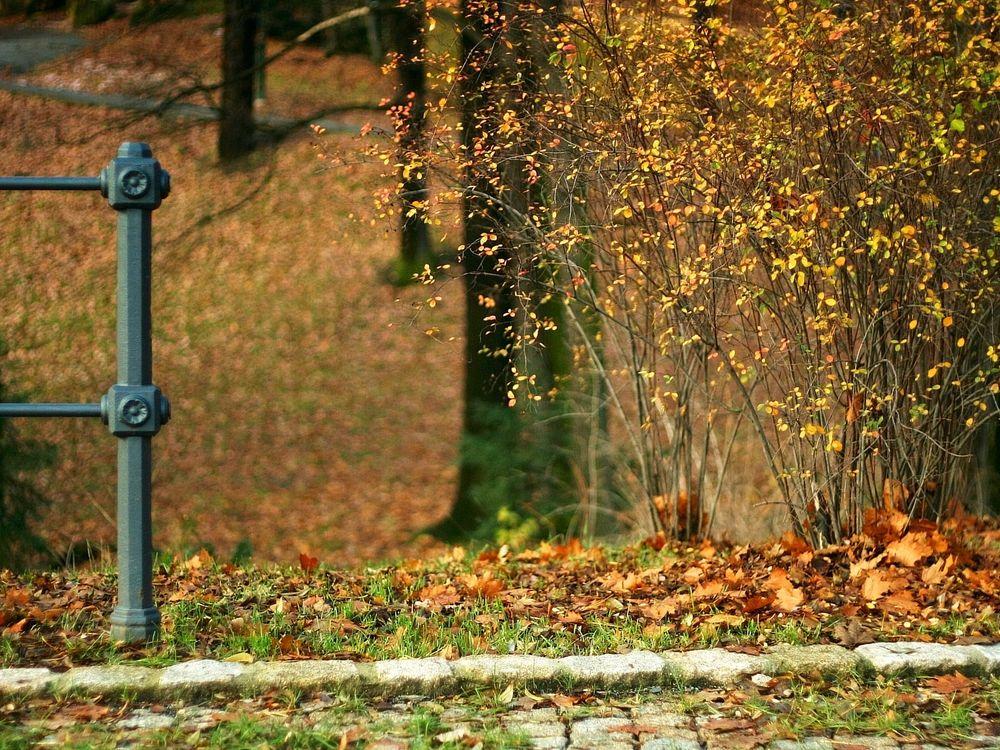Фото бесплатно осень, кусты, листья - на рабочий стол