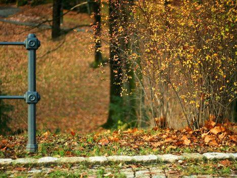 осень, кусты, листья, листопад, холод