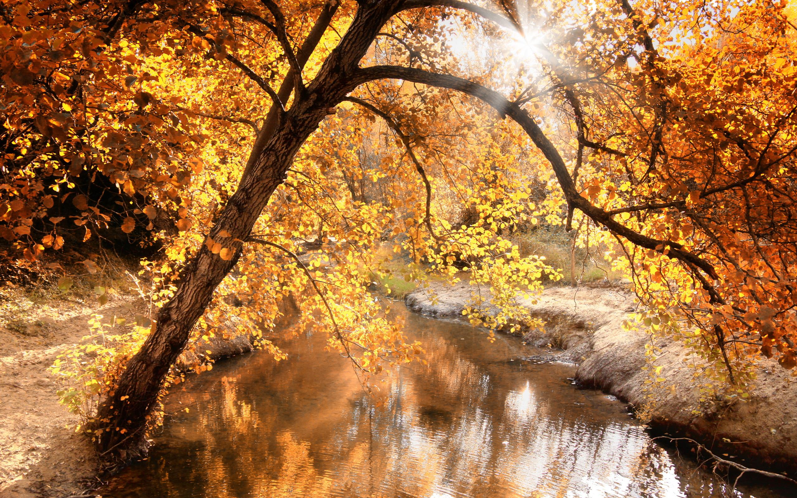 Обои осень, ручей, деревья, дерево