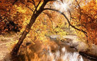Бесплатные фото осень,ручей,деревья,дерево,листья,оранжевые,лучи