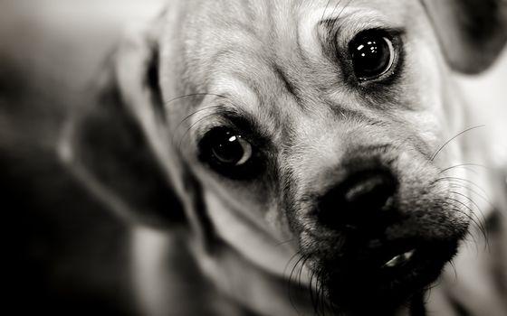 Photo free ears, sad, dogs