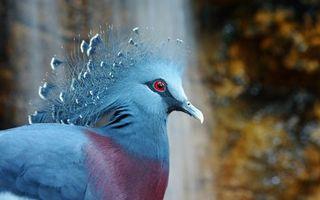 Photo free bird, crown, dove