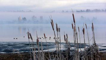 Фото бесплатно река, вода, камыши