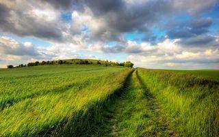 Бесплатные фото трава,поле,деревья,кусты,листья,колея от колес,машина