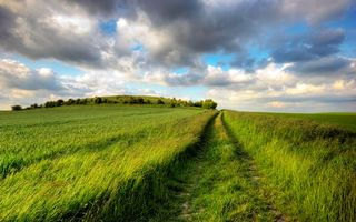 Фото бесплатно поле, кусты, пейзажи