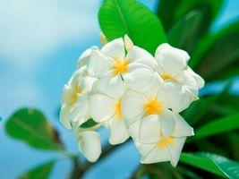 Бесплатные фото цветы,природа,белый,лепестки,зелень