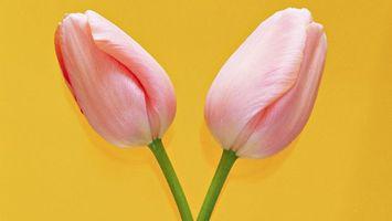 Фото бесплатно тюльпаны, бутоны, розовые