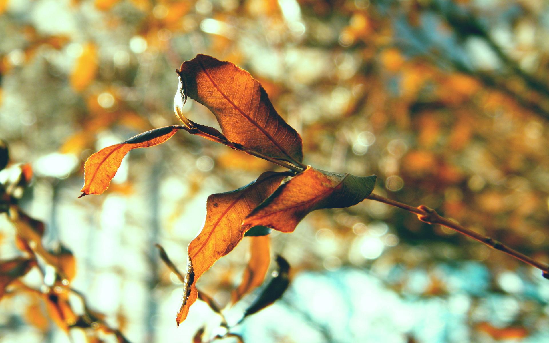 ветка, листья, природа