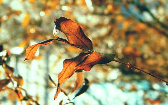 Заставки ветка,листья,природа,солнечный,день,осень,макро