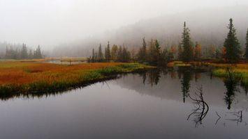 Бесплатные фото вода,трава,деревья,холмы,туман,небо,природа