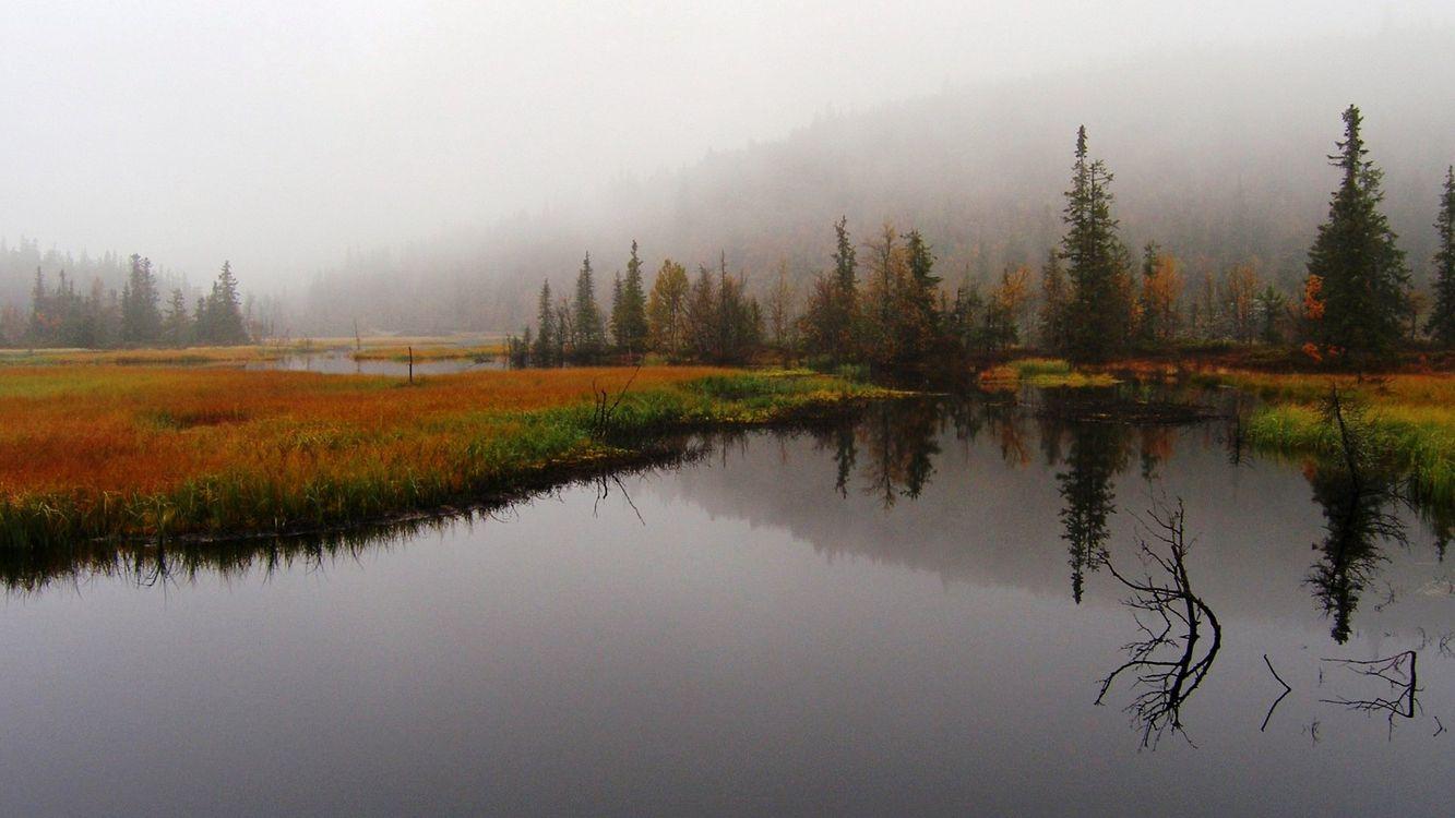 Фото бесплатно вода, трава, деревья, холмы, туман, небо, природа - на рабочий стол