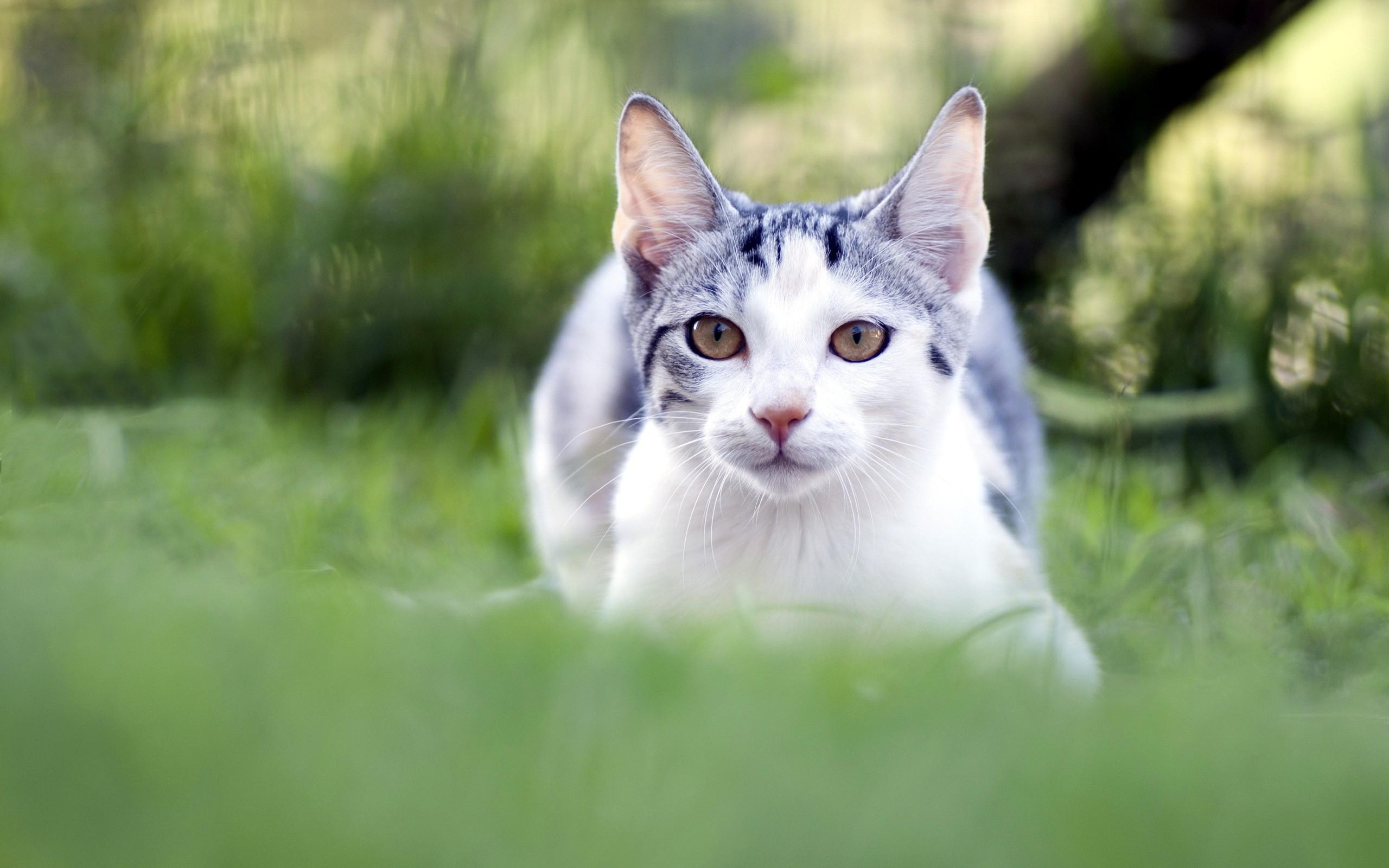 белый кот животное природа загрузить