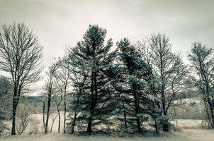Бесплатные фото зима,снег,деревья,ветви,природа